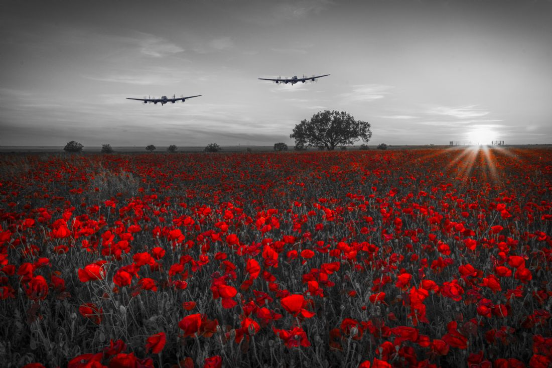 Tom Dolezal | Lancasters over the poppies