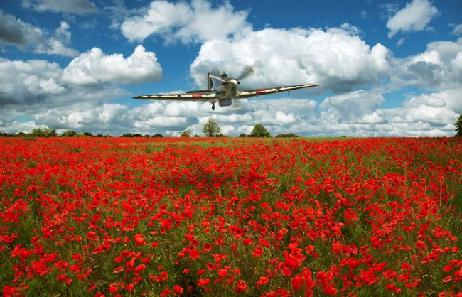 Tom Dolezal | Hurricane over the poppies