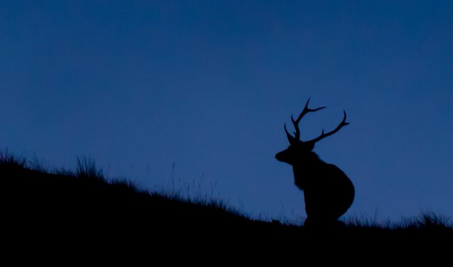 Tom Dolezal | Stag on the horizon