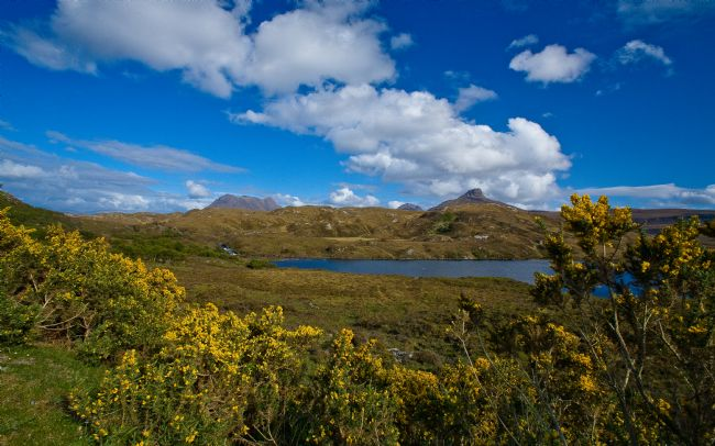 Tom Dolezal | Highland gorse view
