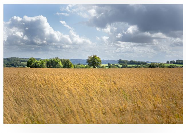 scott Mattock | Cotswold field