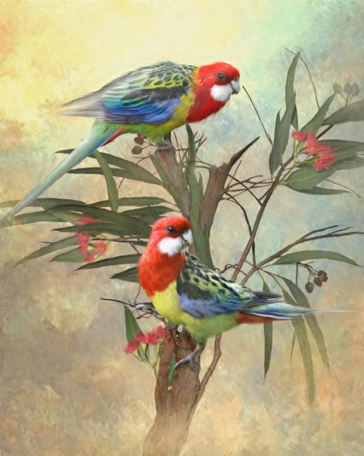 Trudi Simmonds | Eastern Rosella