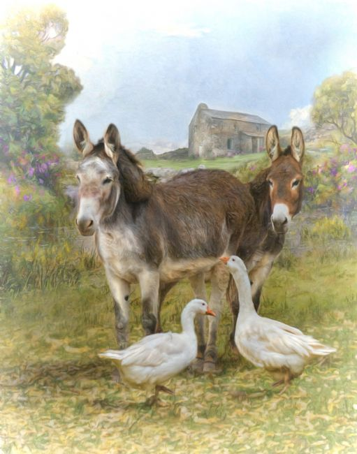 Trudi Simmonds | The Donkeys and The Geese