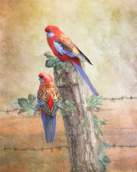 Trudi Simmonds |  Crimson Rosella