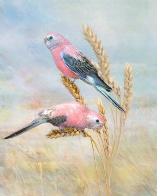 Trudi Simmonds | Bourkes Parrot