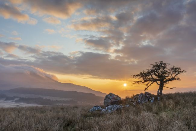 Rory Trappe | Lonely tree at Cwm Edno