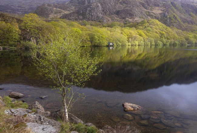 Rory Trappe | A spring morning at Llyn Dinas