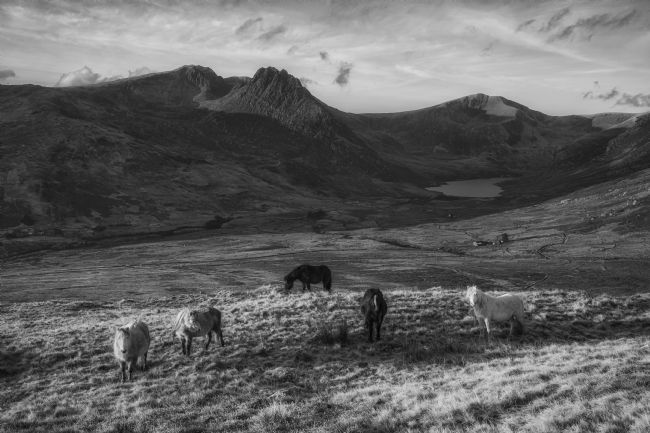 Rory Trappe | Carneddau ponies in the Ogwen Valley