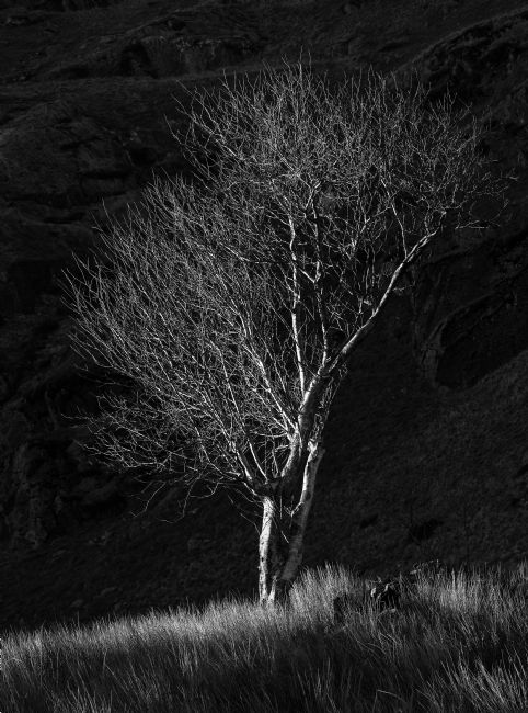 Rory Trappe | Tree at Cwmorthin