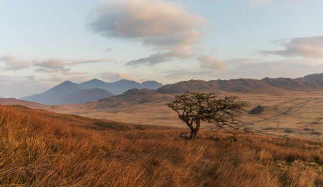 Rory Trappe | Lonely tree with Snowdon in the background