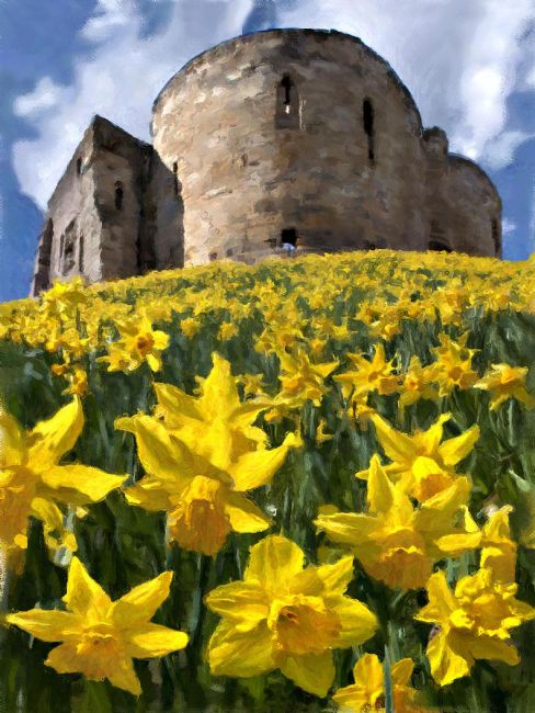 Chris  North | Daffodils at Clifford's Tower in York.