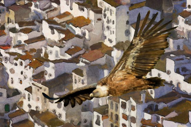 Chris  North | Griffon vulture  over Casares Village, Andalucia Spain.