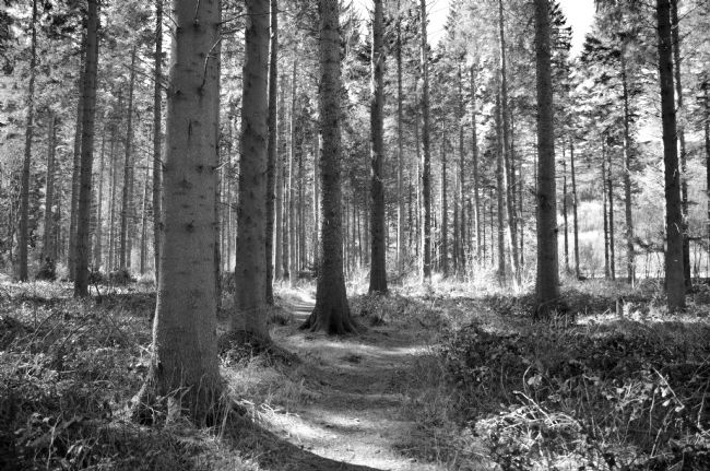 Andrew Heaps | Black and white image of path leading into wood