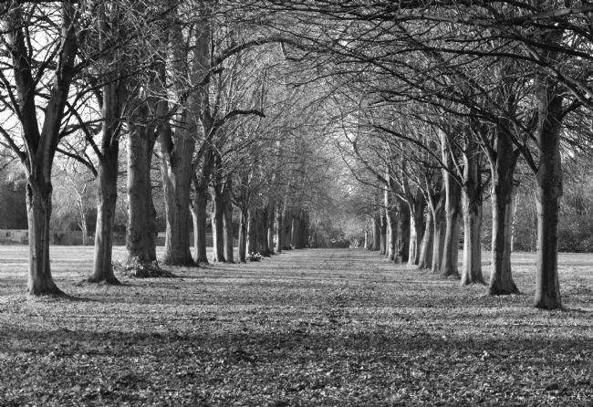 Andrew Heaps | Row of trees inviting you