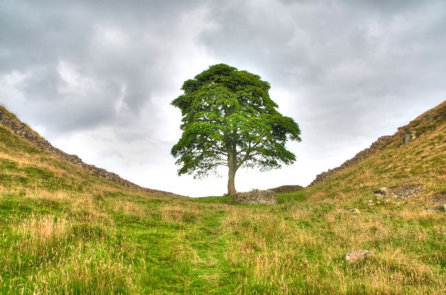 Andrew Heaps | Sycamore gap along Hadrains wall