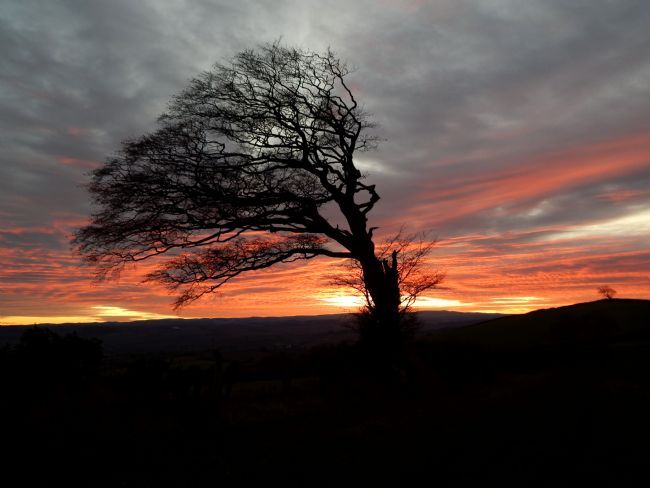 Heather Coleman | Sunset and the Windswept Tree