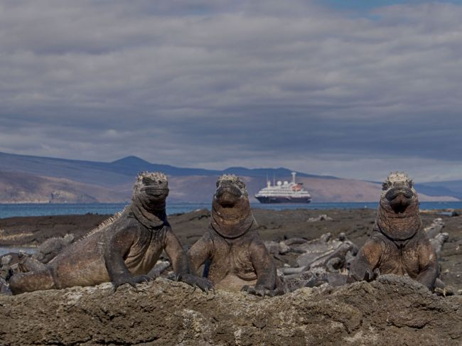 yvonne carroll | Marine Iguanas sunning themselves in the Galapagos, Ecuador