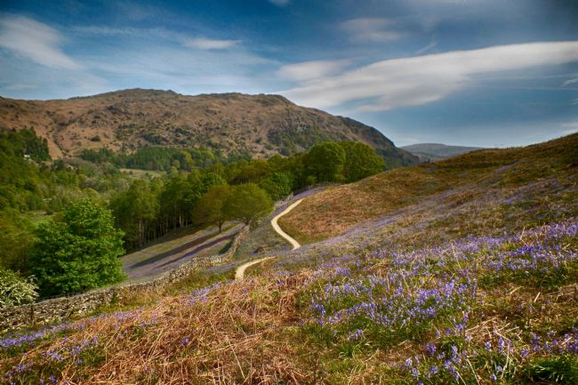 yvonne carroll | Grasmere to Rydal walk with the bluebells in full bloom