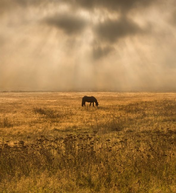 Adrian Campfield | Grazing Horse in Morning Rays