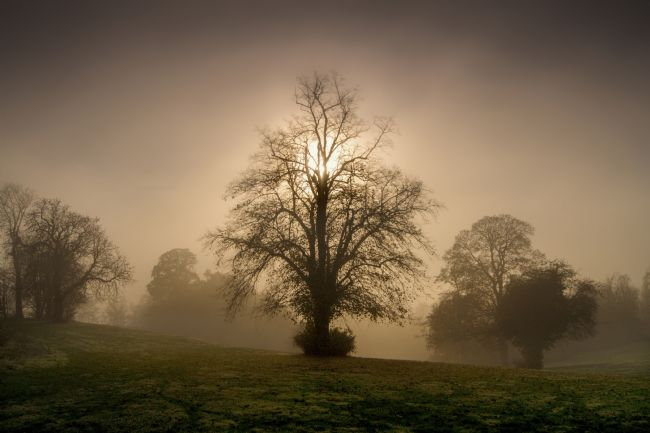 Adrian Campfield | Misty Sunrise Through the Woodlands