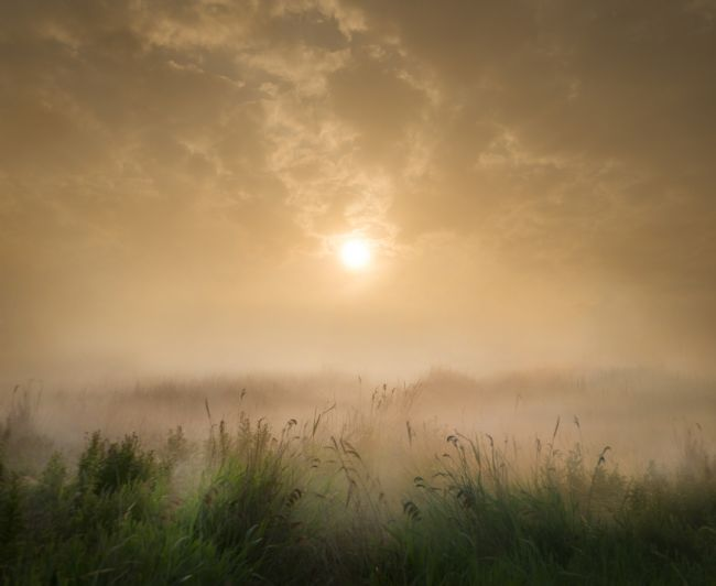 Adrian Campfield | Foggy Sunrise over the Marshlands