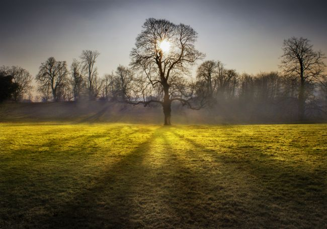Adrian Campfield | Sunrise behind the Trees