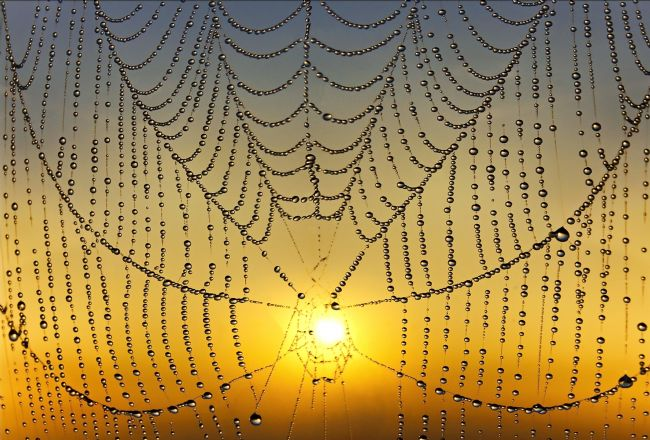 Adrian Campfield | Sunrise Behind the Cobweb