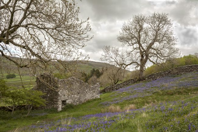 Michael Yates | Bluebells and Ruin