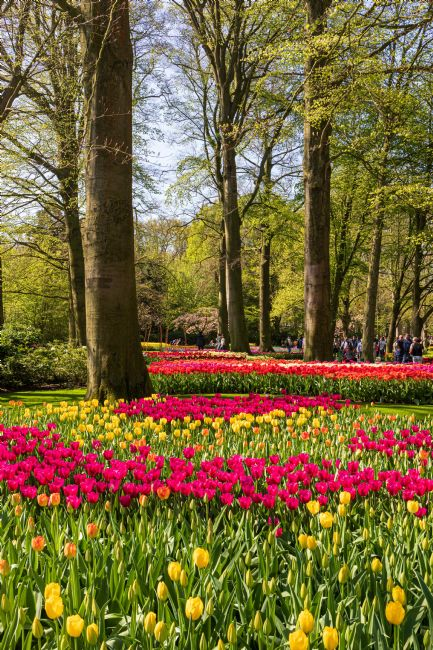 Roger Hollingsworth | Keukenhof Garden, Holland