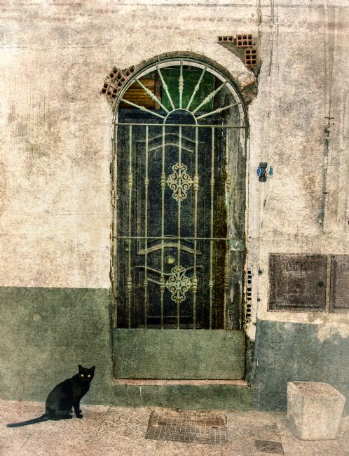 Rina Devine | Cat and Gate