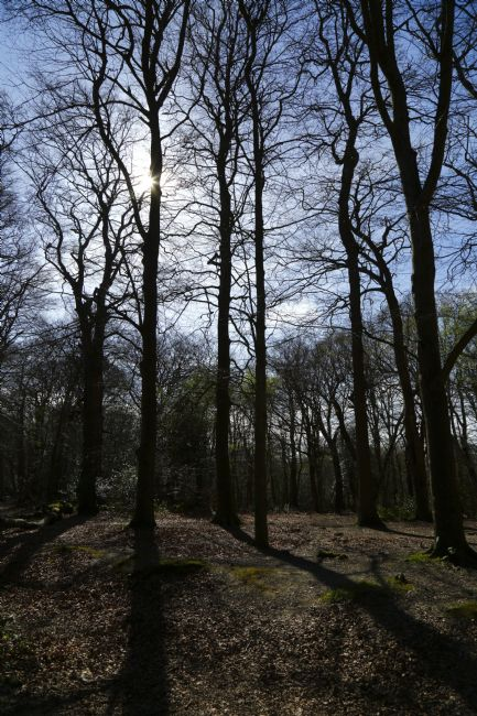 James Brunker | Sunlight and Shadows in Whortleberry Wood Southborough Common
