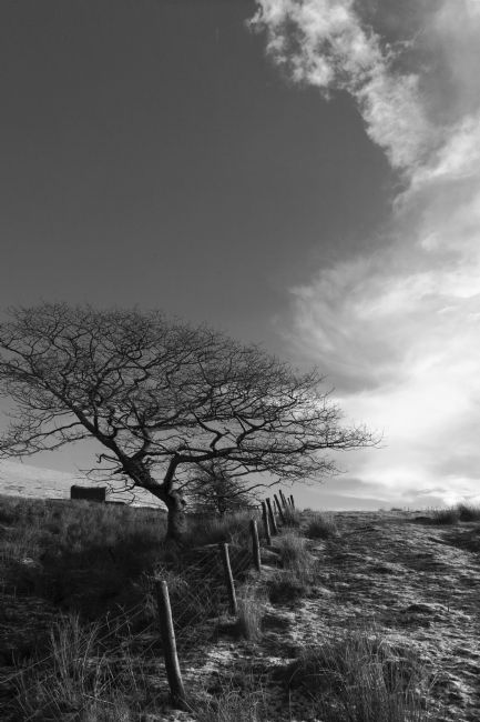 James Brunker | Winter Oak Tree in Monochrome South Wales