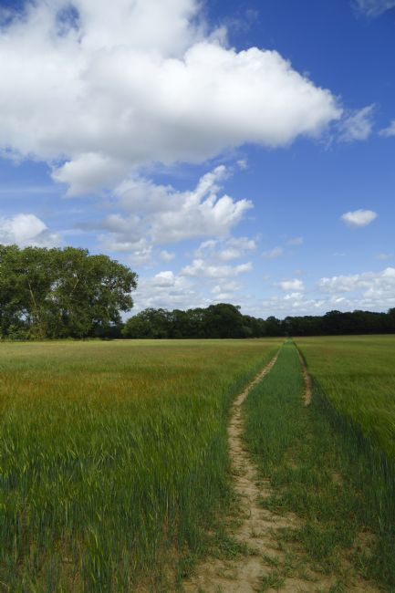 James Brunker | Footpath Through Cornfield near Tudeley on a Summer's Day Kent