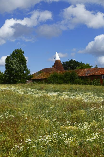 James Brunker | Oast House and Summer Flower Meadow Tudeley Kent