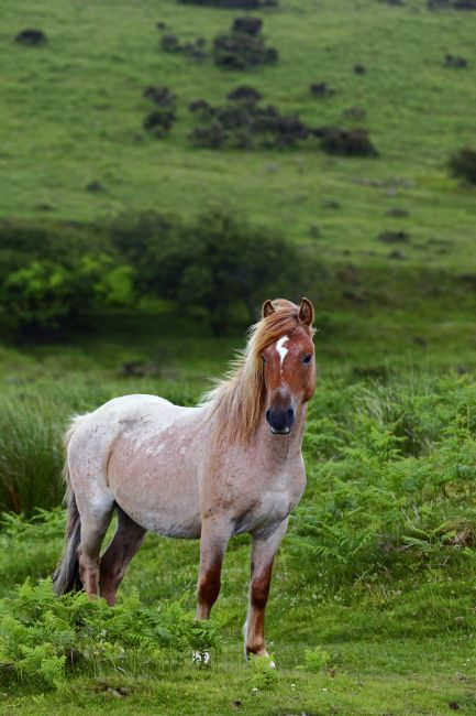 James Brunker | Wild Pony on Bodmin Moor