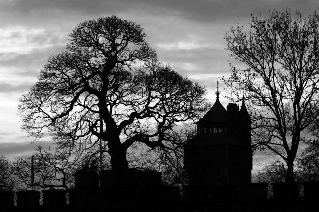 James Brunker | Cardiff Castle And Winter Tree Silhouettes