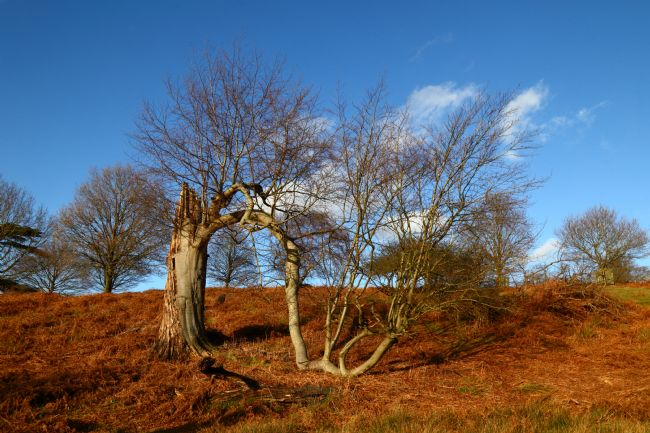 James Brunker |  A Survivor of the Great Storm of 1987 Knole Park Kent