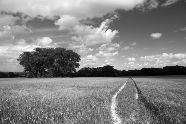 James Brunker | Footpath through cornfield in Black and White near Tudeley Kent