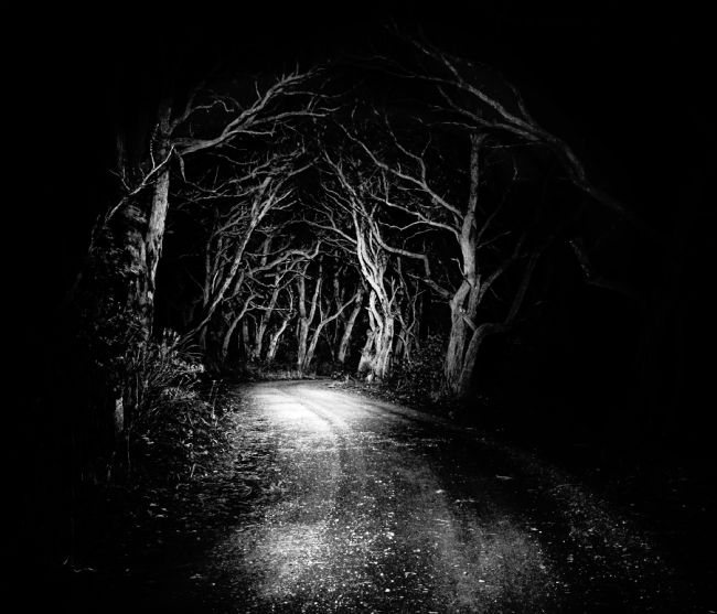 Leanne Robson | Enchanted Woods