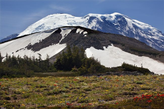 William Perry | Mount Rainier Sunrise Wildflowers Snow
