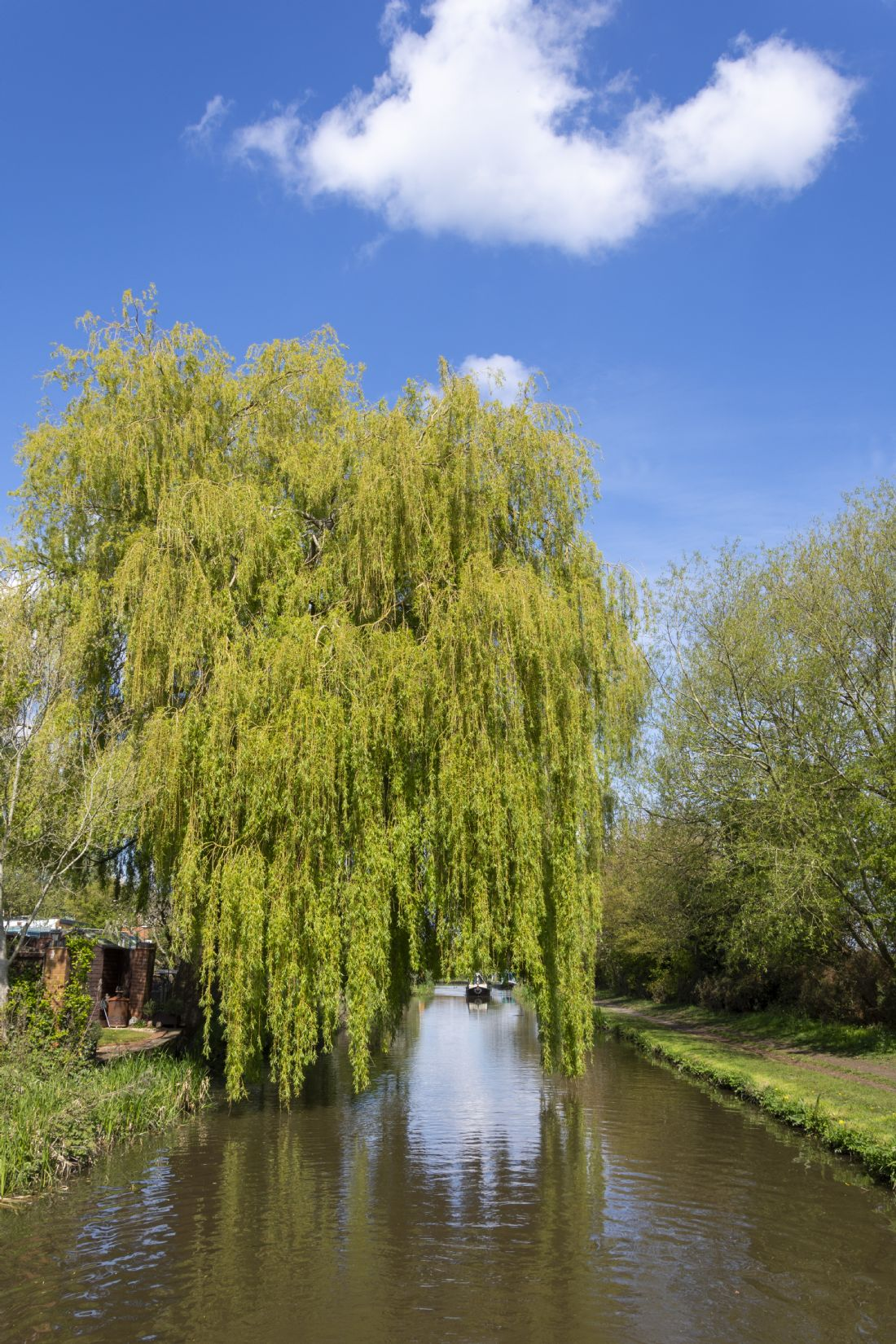 Steve Stamford | Arch through the willow               Along the Trent and Mersey