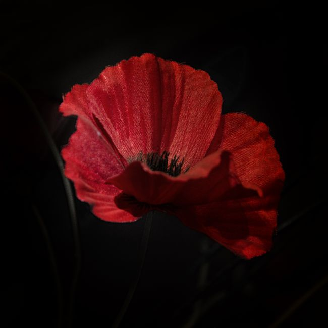 Steve Stamford | Remembrance poppy 2