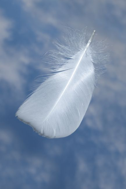 Steve Stamford | A single swan feather