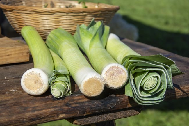 Steve Stamford | Leeks on the menu