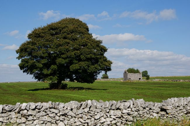 Steve Stamford | Barn and tree