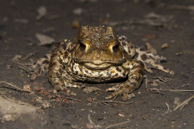 Steve Stamford | Toad stare