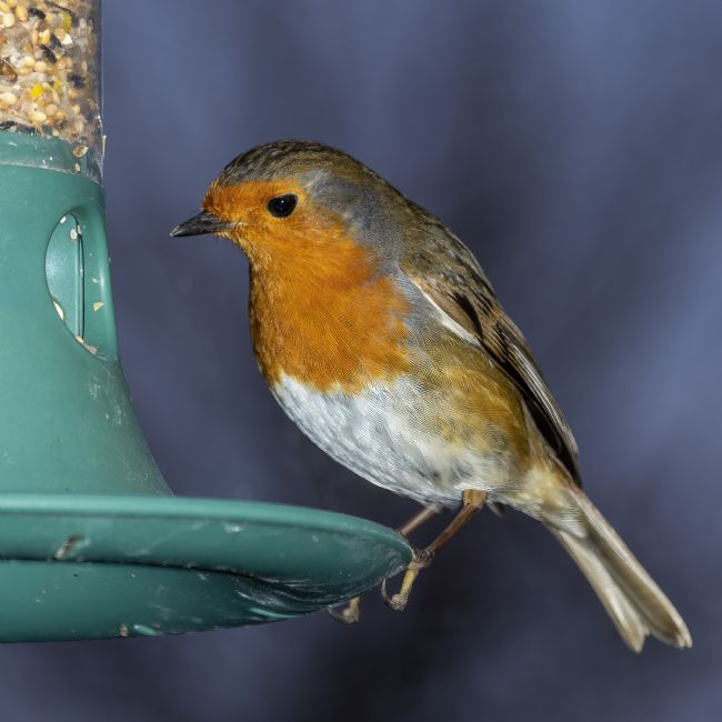 Steve Stamford | Robin comes for lunch