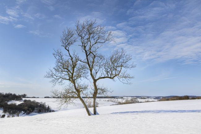 David Hare | Tree in snow
