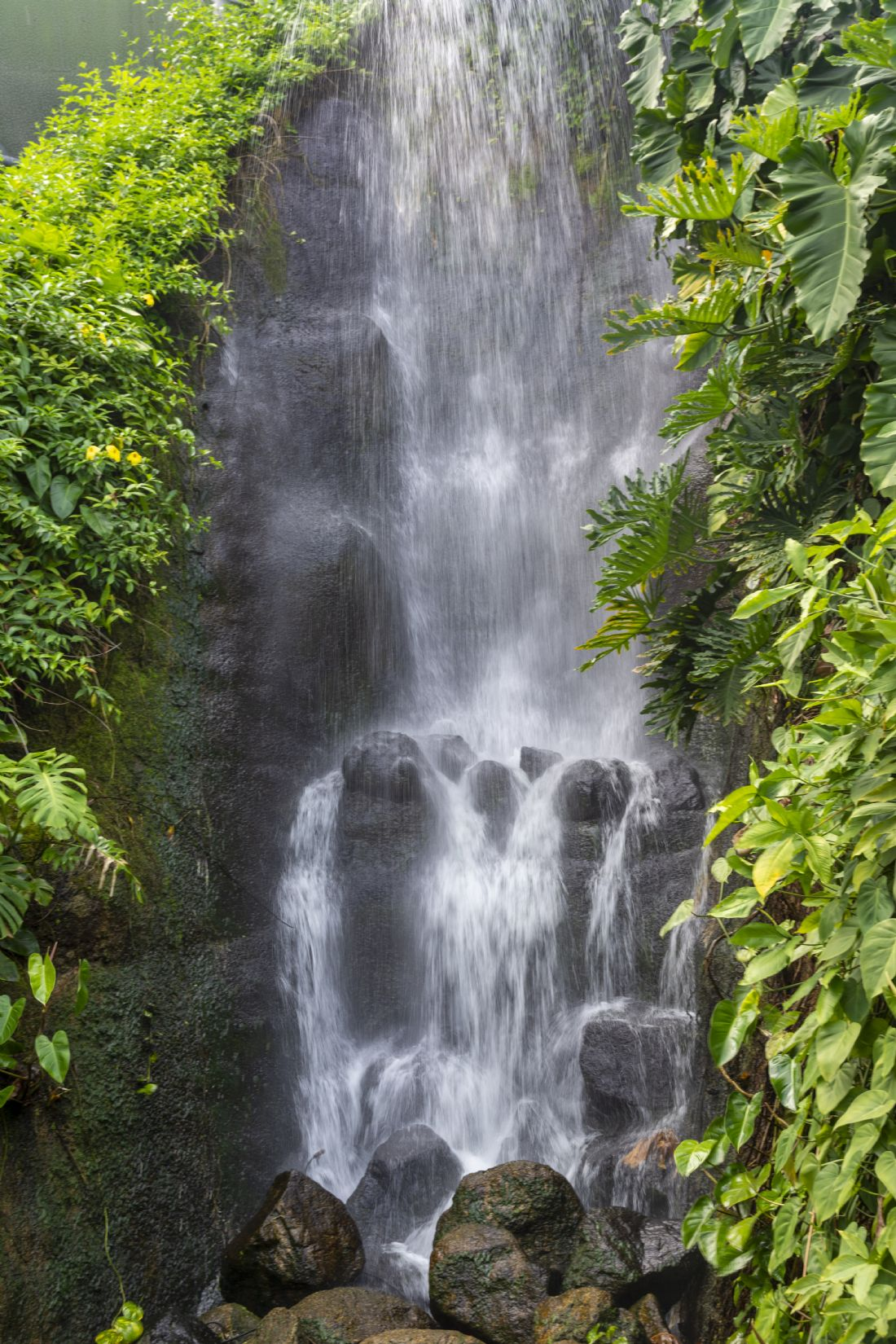 Mary Fletcher | Tropical Waterfall