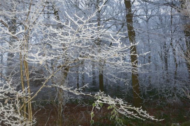 Mary Fletcher | Frosty Woodland